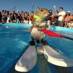 かわいすぎるリスの水上スキーが話題!「Twiggy the Waterskiing Squirrel」